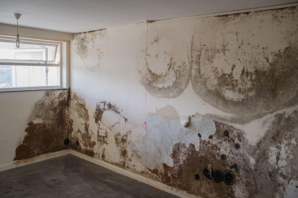 xử lý chống ẩm mốc tường nhà